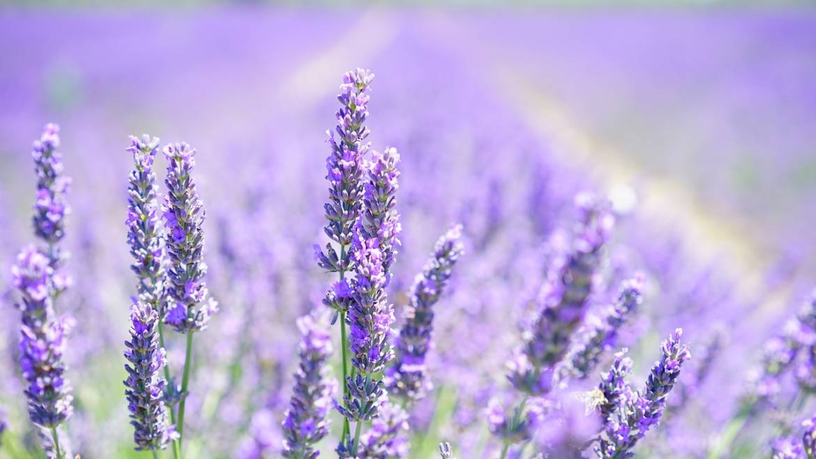 Aromatherapy and the Benefits of Essential Oils